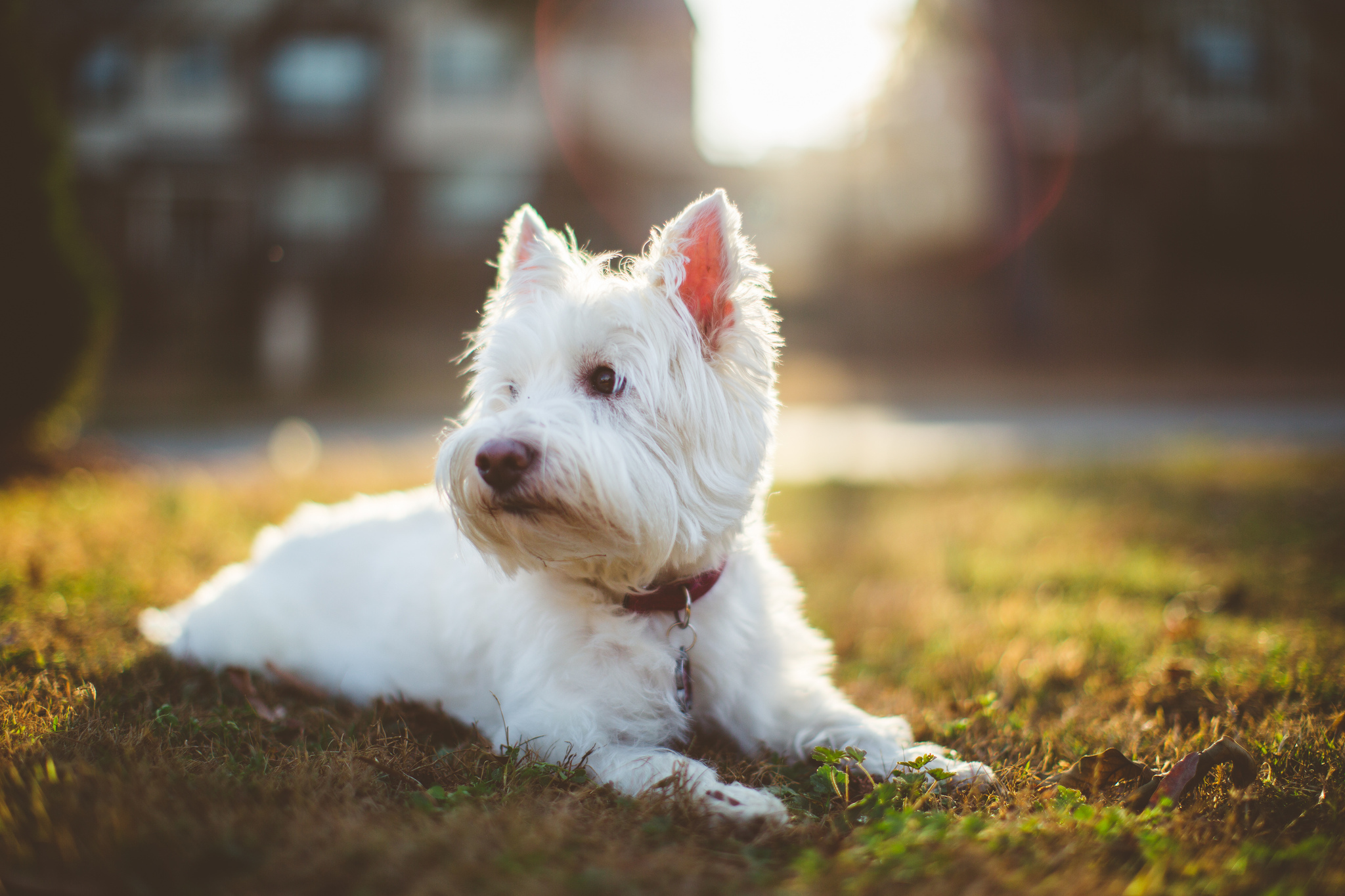 Μυστικά για απολαυστικές βόλτες με το σκύλο σας