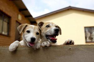 To νομοθετικό πλαίσιο για τα ζώα συντροφιάς