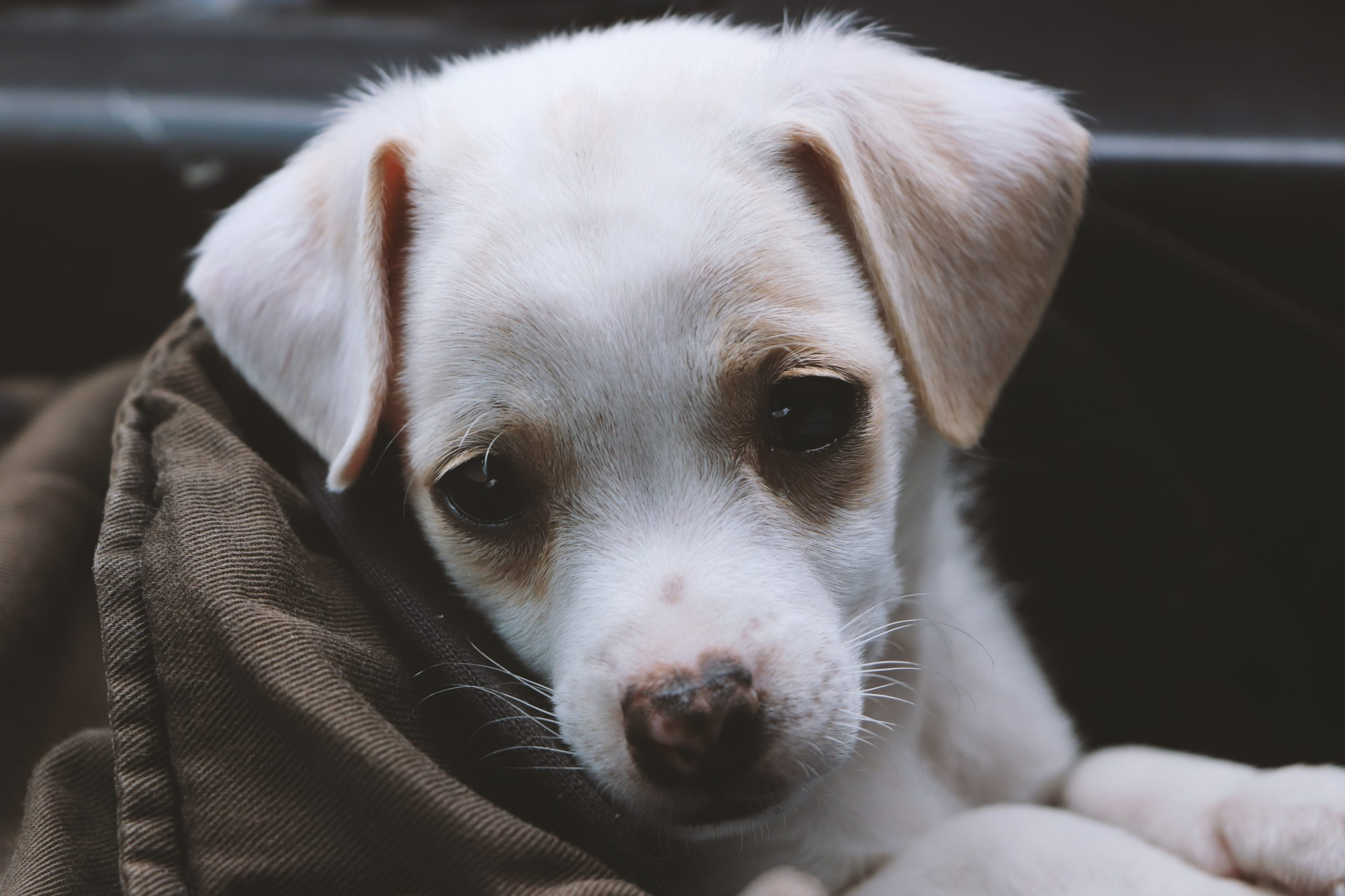 adorable-animal-breed-1203705