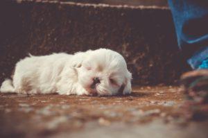 Δέκα πράγματα που κάνουμε και δεν αρέσουν στους σκύλους