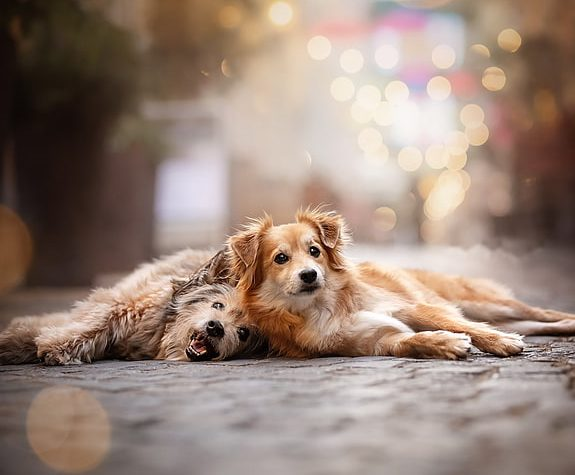 RESIZED - dog-animals-wallpaper-preview